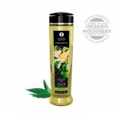 Съедобное натуральное массажное масло Shunga ORGANIKA Green Tea (зеленый чай, 240 мл)